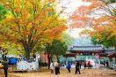 Những điểm vui chơi mùa hè cực chất ở Hàn Quốc