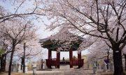 Ghé thăm Seoul mùa nào đẹp nhất?