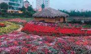 Những địa điểm chụp hình ngàn sắc hoa xuân ở Hà Nội